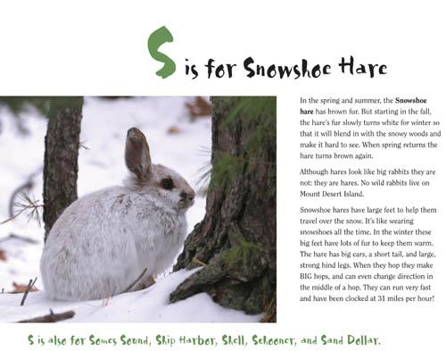 SnowshoeHare