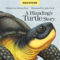 ABlandingsTurtleStoryWeb